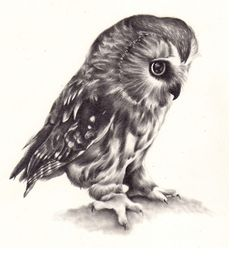 I drew an owl I'm getting a load of drawings together to put up for sale in a shop in the foreseeable future and I figured generic wildlife drawings will sell, so I'll be doing a few more like this soon