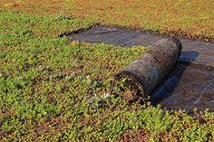 Een groen dak heeft voordelen voor isolatie en voor het milieu.
