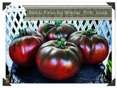 Black-Krim-tomatoes-01.jpg (1024×768)