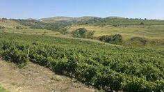 Panoramio - Photo of Gura Vadului, România by musca.ro