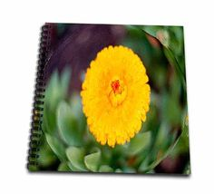 click on A Bright Yellow Flower with an Orange Center In a Bubble With Green Leaves all Around to enlarge!
