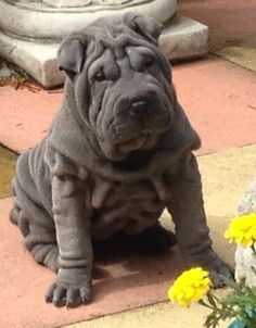 one of our gorgeous puppies.......