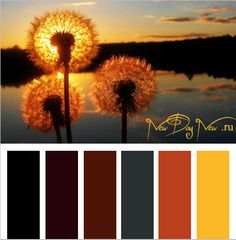 Сочетания цветов желтый коричневый оранжевый