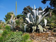 jardin mediterraneen photos - Google Search