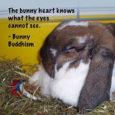 Marshall the bunny, Photo courtesy of Kate W.
