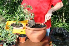 Wer keinen Gemüsegarten hat, muss deswegen nicht auf selbst angebaute Tomaten verzichten. In große Töpfe gepflanzt gedeiht das gesunde Gemüse auch hervorragend auf Balkon und Terrasse – mit diesen fünf Tipps sogar noch etwas besser.
