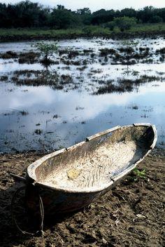Y un cayuco va, del remo al jalar,  Abriendo el jacinto  Que esta floreciendo en gran cantidad.    Letra y Música de José Luís Peña Valencia