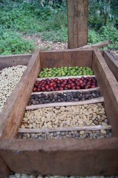 The coffee beans have to start somewhere