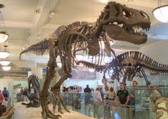 Al museo di storia naturale  Vai a fare il giro delle sale  Sai quel che conviene visitare  Guai a non lasciarsi ipnotizzare  Dai mondi lontani