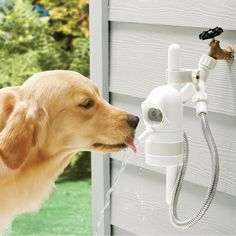 Pet Fountain with a sensor that detects when your dog approaches and then shuts off when he leaves.