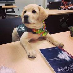 Descubre a estos 10 cachorros en su primer día de trabajo