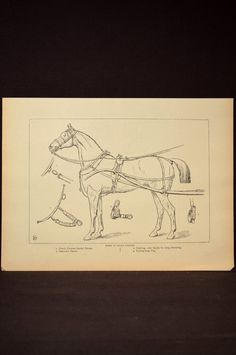 Horse Harness Wall Art Horse Wall Decor Book Page Plate