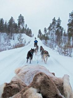 Guesthouse Husky:                   Exhilarating husky safari Cabins in Saariselkä http://www.saariselka.com