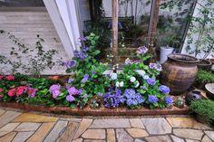 「ランウェイスタイル花壇(鉢の入れ替え方式でつくる花壇)」の作り方 - 「風景」をつくるガーデニング術 Hibiscus Tree, Flower Basket, Exterior, Garden, Flowers, Plants, Balcony, Garten, Lawn And Garden