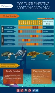 #Infographic Something important that you should know ! Top Turtle Nesting Spots in #CostaRica