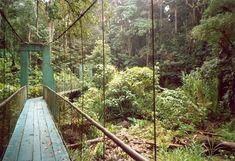 Bridge to Selva Verde Lodge / Sarapiqui Rainforest, Costa Rica