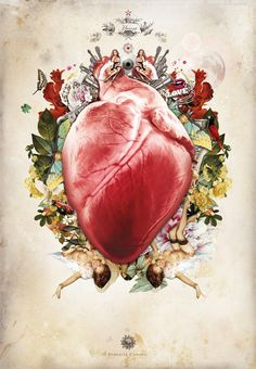 Organs - Heart by Nadful