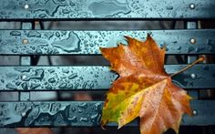 *autumn leaf * - color, brown, autumm, rain, drops