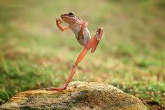 baile de la rana
