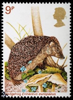 Erinaceus europaeus, Hedgehog. 9p British Wildlife Stamp ,circa 1977.