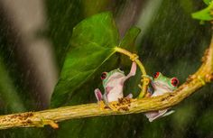 Leaf Umbrella-Wild animals have their own ways of coping with rainwater, but sometimes, when they find themselves under an opportune leaf, flower or mushroom, they look just like people hiding from the rain under umbrellas!