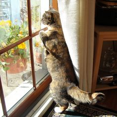 cat at window, she has to watch the house!