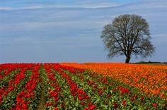 Fields of Color #oregon