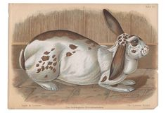 The Lorraine Rabbit, 1902 on OneKingsLane.com
