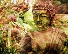 La natura del Buddha
