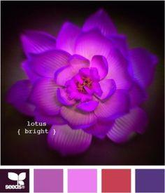 Фиолетовый.