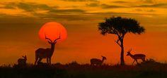 Las 7 potencias africanas son las deidades principales del panteón yoruba, invocadas como una sola fuerza para socorrer a los creyentes