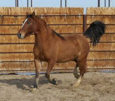 Horse Number: 6658, Image Name:6658b.jpg
