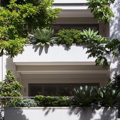 Succulents cascading over a balcony . we created the landscaping about 4 years ago . Balcony Flowers, Hanging Flowers, Landscape Design, Garden Design, Floating Garden, Balcony Garden, Balcony Ideas, Water Flowers, Potting Soil