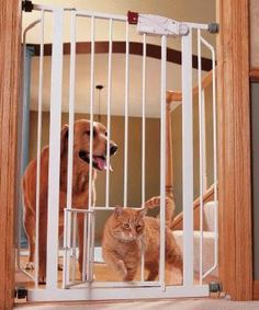 Best 25 Pet Gate Ideas On Pinterest Diy Baby Gate Diy