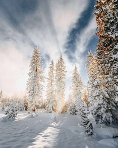 Winter in Yellowstone means fewer crowds frigid temperatures and steaming geyser basins. Skis snowshoes snowcoaches and snowmobiles become the primary modes of transportation as roads close rivers and lakes freeze and snowstorms transform the park into a winter wonderland.   @cole.mgkra
