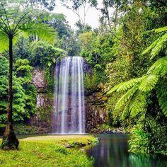 Milla Milla Falls, Atherton, Qld.