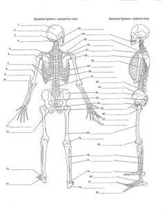 anatomy labeling worksheets bing images esthetics pinterest anatomy and worksheets. Black Bedroom Furniture Sets. Home Design Ideas
