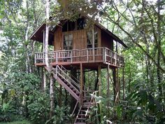 Beautiful Tree Houses, Cool Tree Houses, Fairy Houses, Puerto Rico, Jungle Resort, Treehouse Hotel, Treehouse Living, Jungle House, Jungle Tree