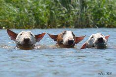Bullies enjoy a swim