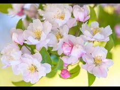 Krisztus Feltámada Igazságunkra Spring Nature, Deco, Nature Photography, Photos, Rose, Flowers, Plants, Blog, Image