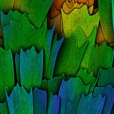 Scales of a butterfly wing | 2016 Photomicrography Competition | Nikon's Small World