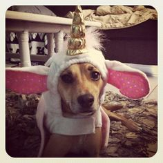 @Amy Cassell dresses Belle up as a Unicorn. Florida Unicorn Turns Out to Be Dog in Costume...