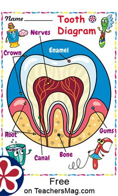 """Free """"Happy and Sad Tooth,"""" Dental Health Printables For Preschool Dental Activities For Preschool, Health Activities, Preschool Crafts, Space Activities, Dental Health Month, Oral Health, Dental Posters, Dental Hygiene School, Health Lessons"""
