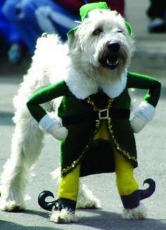 Saint Patricks Dog
