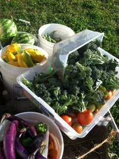 {food policy} Why Do You Grow Clean Food? / From Scratch Club    Organic Farmers react to the Stanford University School of Medicine's Meta Analysis of the nutrition of Organic v. Conventional