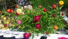 Летние цветы 🌺🌺