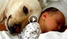 Diese Haustiere treffen zum ersten Mal ein Neugeborenes Baby. Die Reaktionen sind berührend!