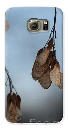 Maple Seeds II phone cover by Rowena Throckmorton. Protect their new iPhone or Galaxy with an impact-resistant, slim-profile, hard-shell case. The image is printed directly onto the case and wrapped around the edges for a beautiful presentation.
