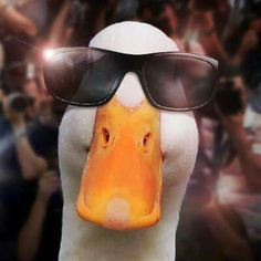 Yes, I am THE Afflack duck. Do you need an autograph?