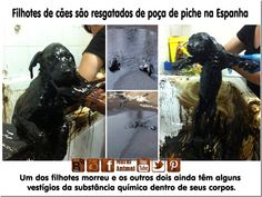 Puppies rescued into a pool of hot tar in Spain Cruelty Free, Spain, Puppies, Blog, Animales, Unconditional Love, Puppys, Spanish, Newborn Puppies